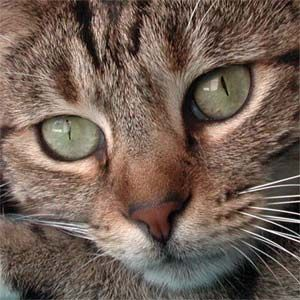 MY TABBY CAT WILL OVERTHROW THE COMMUNIST PARTY of CHINA - Jonathan Wolfman - Open Salon