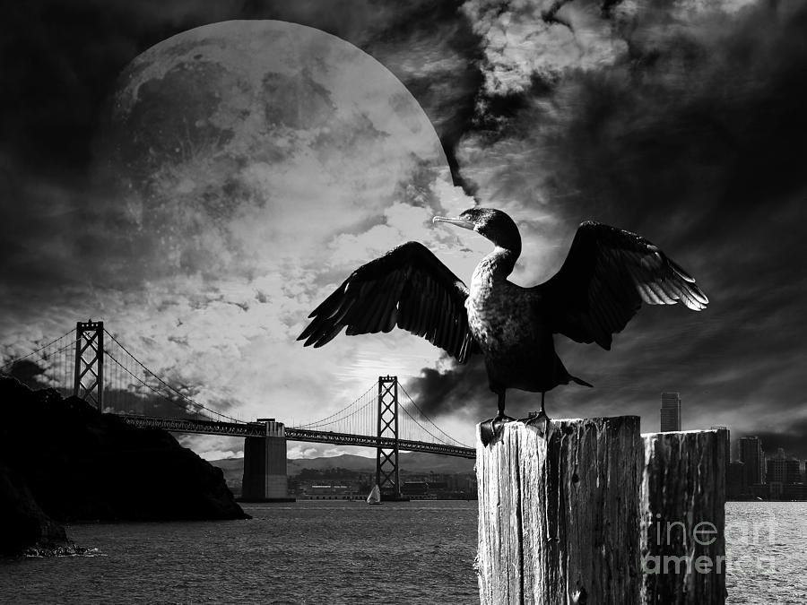 Night of the cormorant black and white wingsdomain art and photography