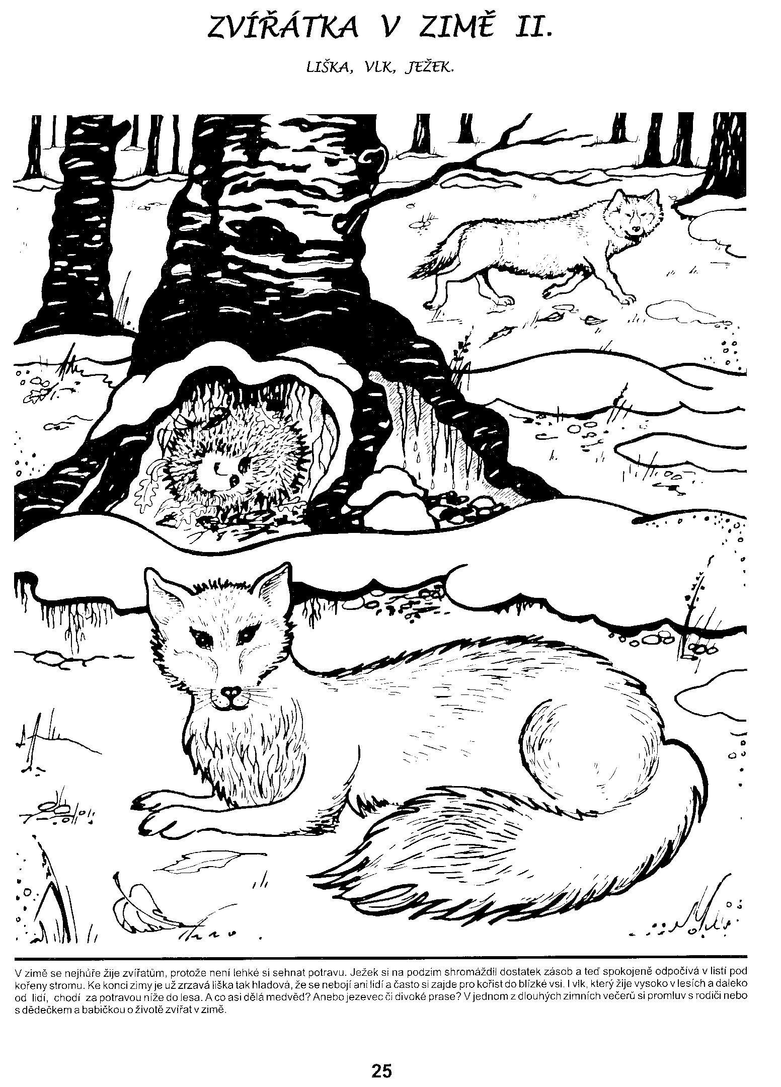Zima Pracovni List Hledat Googlem Druzina Animals That