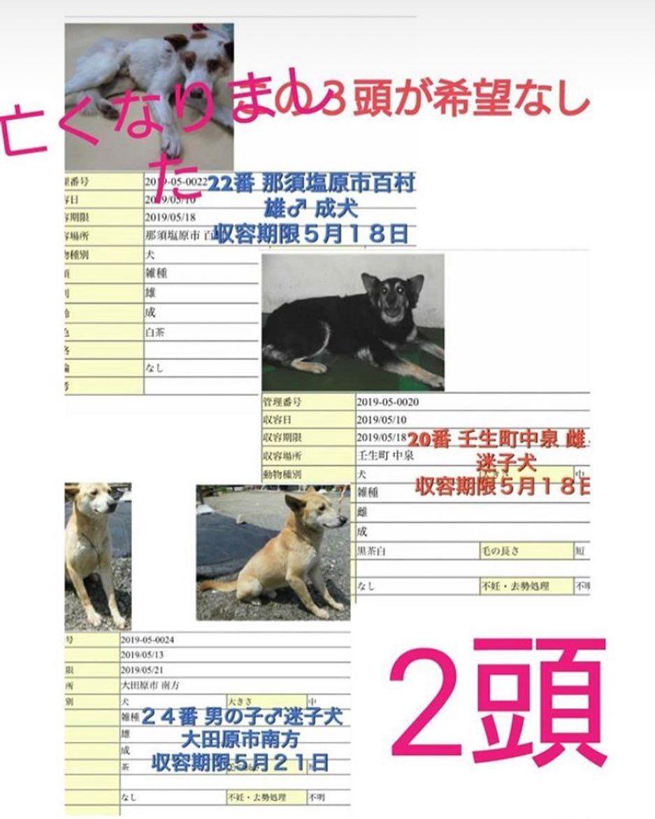 拡散希望お願いします 上の子は亡くなってしまいました 天国で幸せになれますように 下の2匹はまだ里親さんが見つからないそうです 家族に迎えていただける方どうか助けてください Yuna S T102 にご連絡お願いします 犬 保護犬 里親募集 殺処分