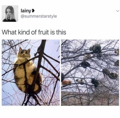 New Funny Animals Funny Animal Memes Of The Day – 30 Pics Ep10 - Lovely Animals World Funny Animal Memes Of The Day – 30 Pics E10 - Lovely Animals World #catmemes #funnycat #cutecat 11