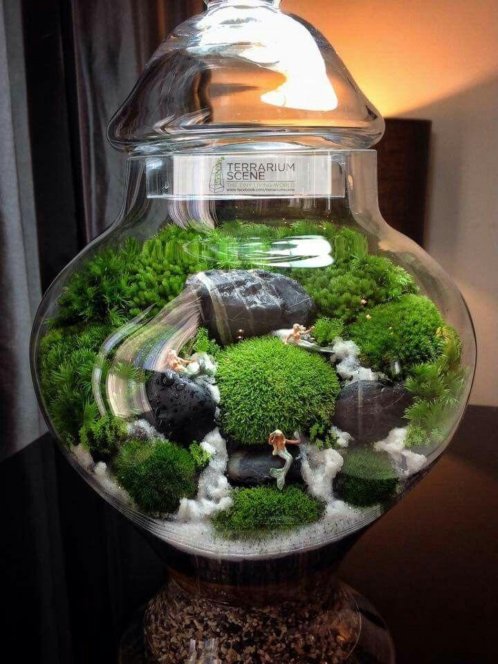 Minigarten Im Glas pinicemoon on minigarten im glas | terrário, jardim no pote