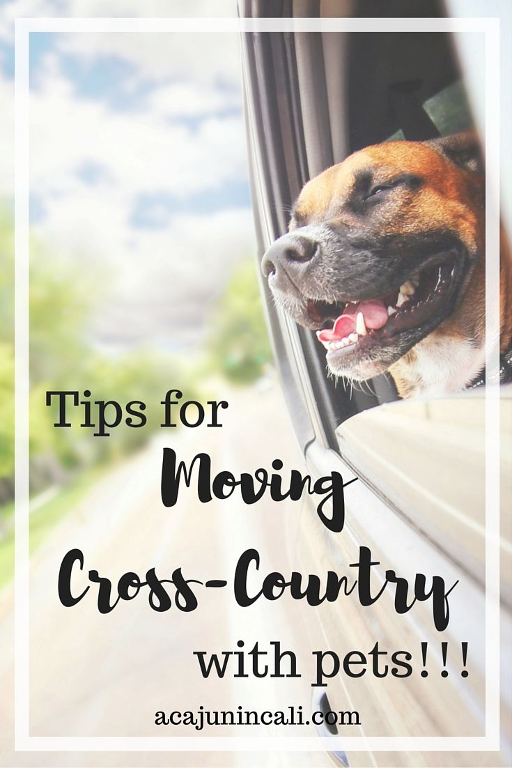 Tips For Moving Cross Country With Pets Moving Cross Country Moving Across Country Road Trip With Dog
