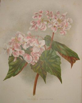 pink flowers  no. - 11