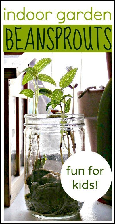 Indoor gardening fun growing beansprouts garden projects gardens easy indoor garden project for kids beans sprout fast so it is great for impatient workwithnaturefo