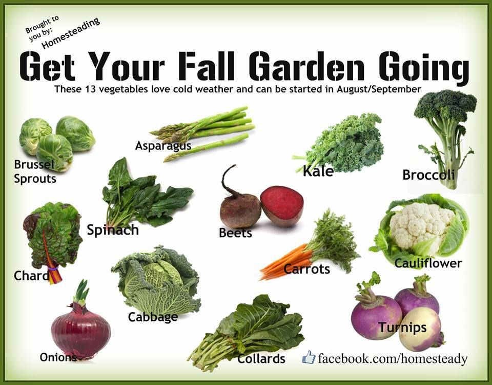 fall garden veggies nice visual reminder of what grows well into fall harvests or under hoops - Fall Garden Plant