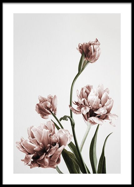 Pink Tulipe no3 Poster in the group Posters & Prints / Bestsellers ...