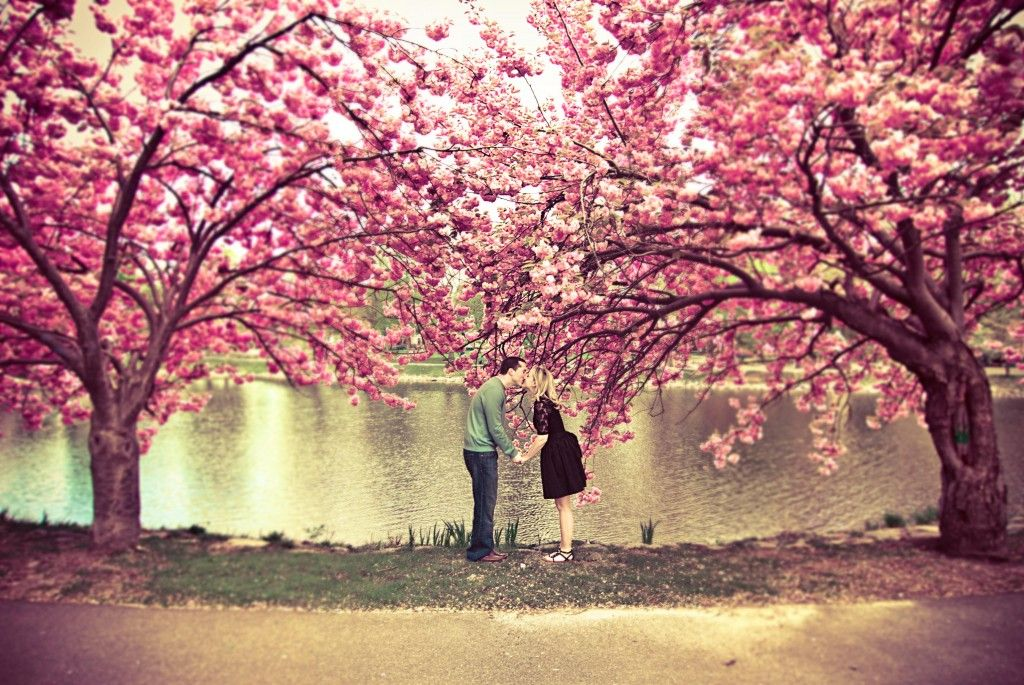 Orlycoolromance Orlynails Tree Photography Beautiful Tree Sakura Tree