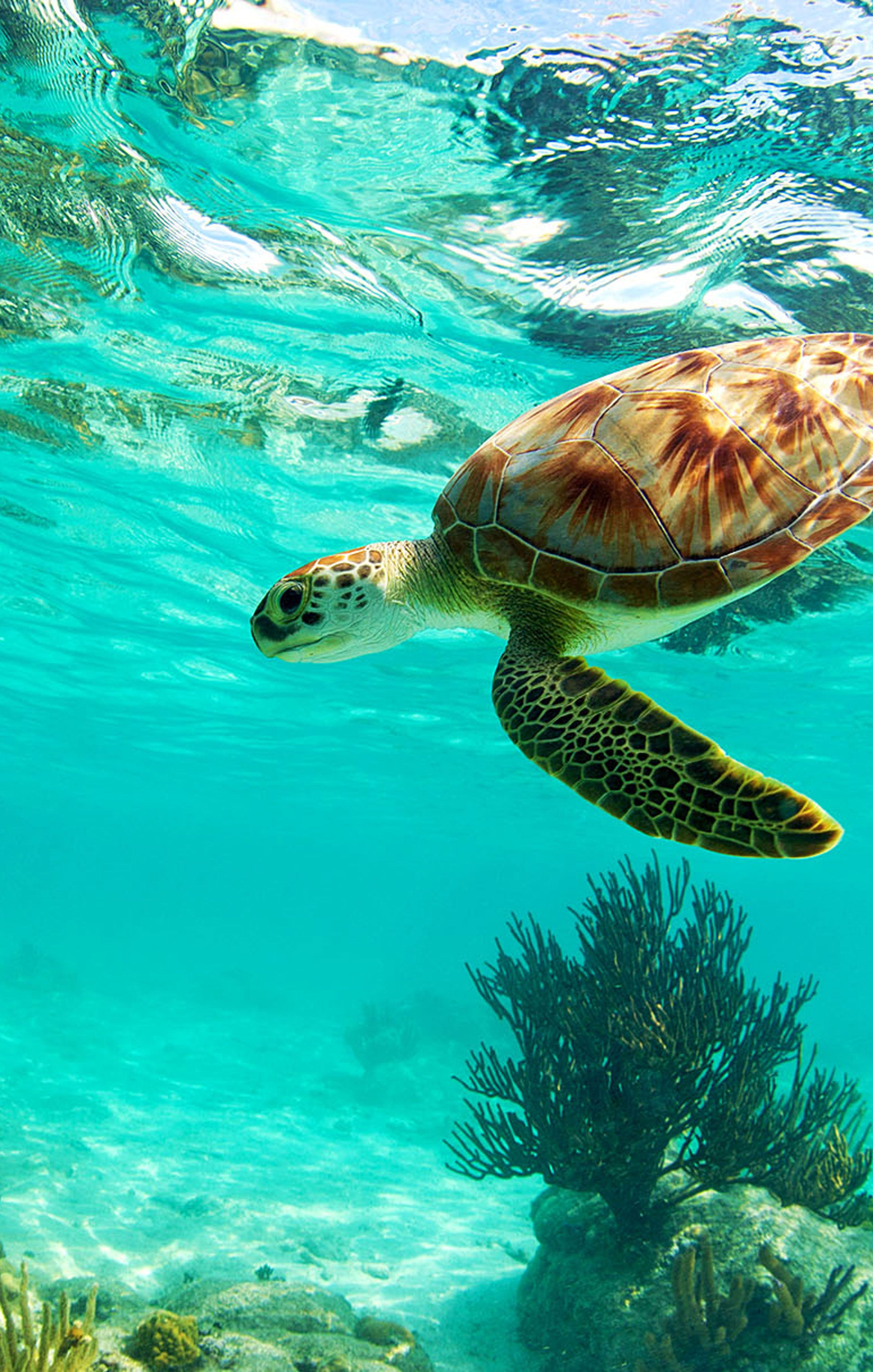 Sea Turtles Deep Ocean Waters Beach Sand Shore Aquatic Animal Hoodies for Men