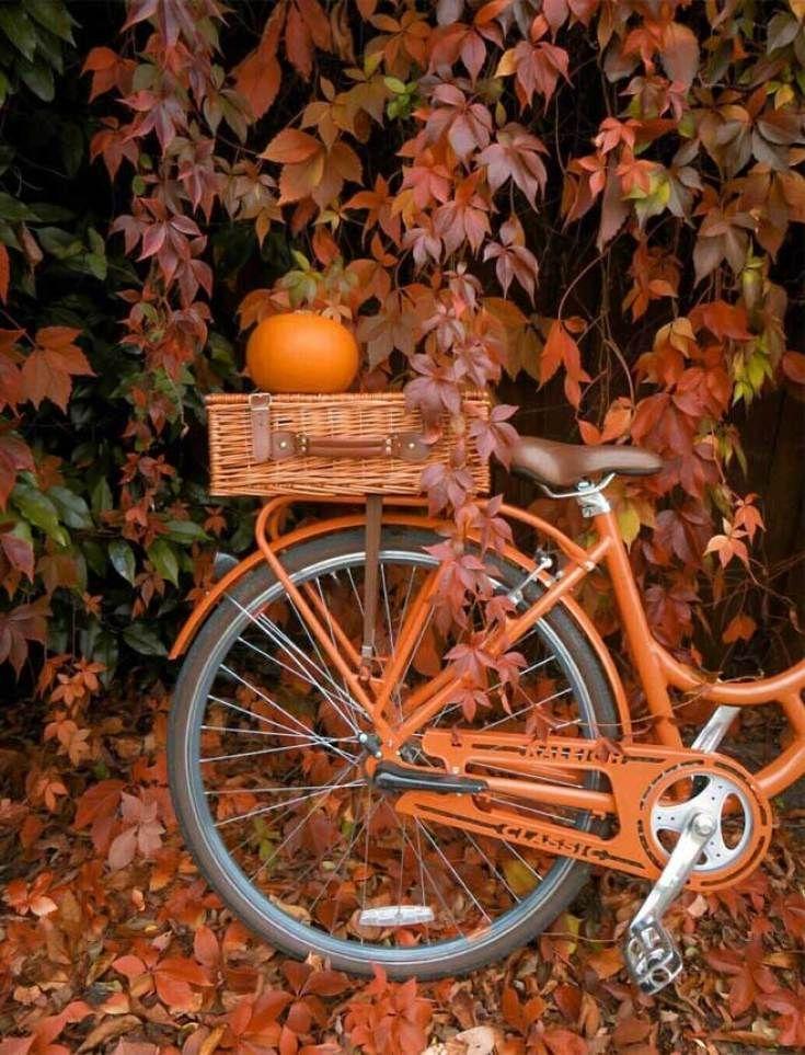 22 beautiful autumn images, autumn image #autumnaesthetic #autumn #fallimage #pumpkins #autumnscenes