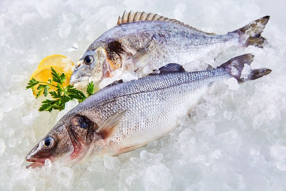 How to choose the best fish in the market