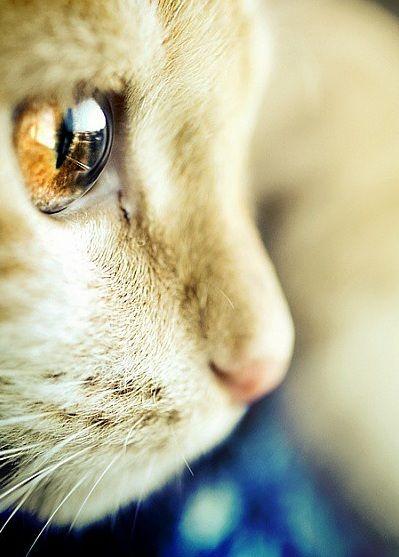 My favourite kitty