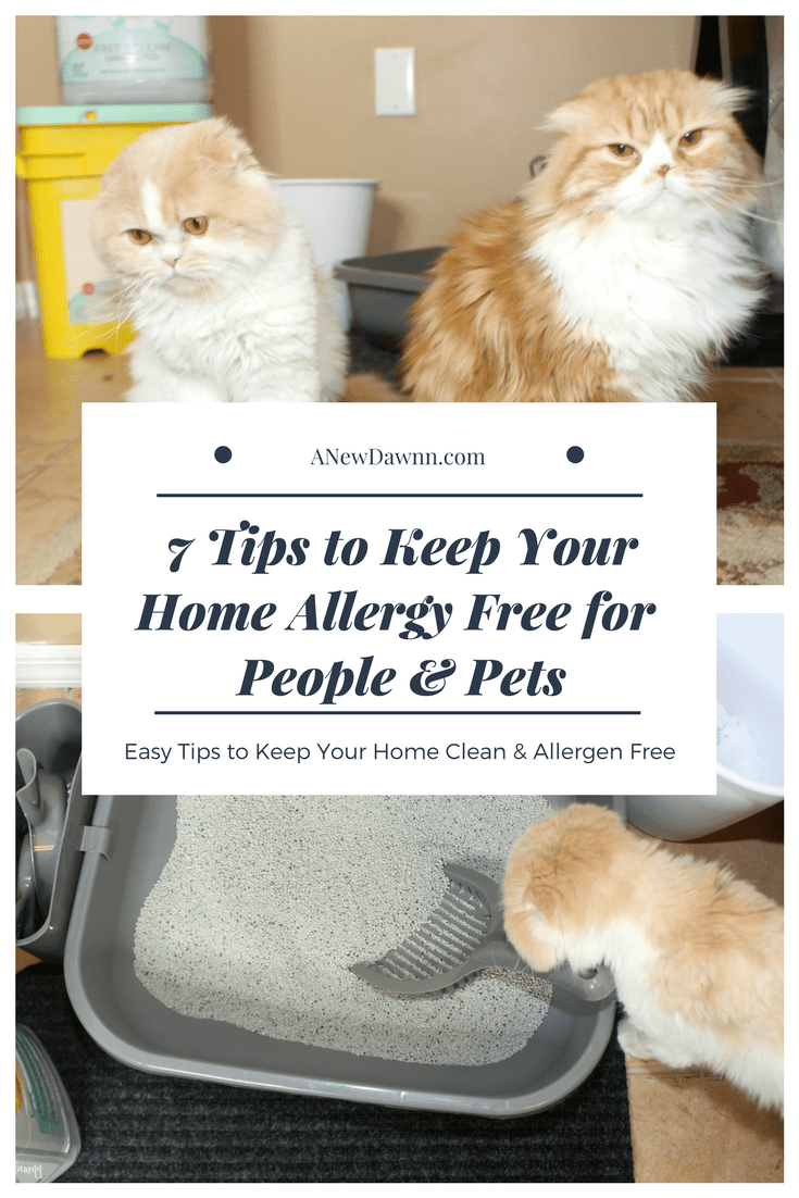 7 Ways To Keep Your Home Allergy Free For People And Pets Cat