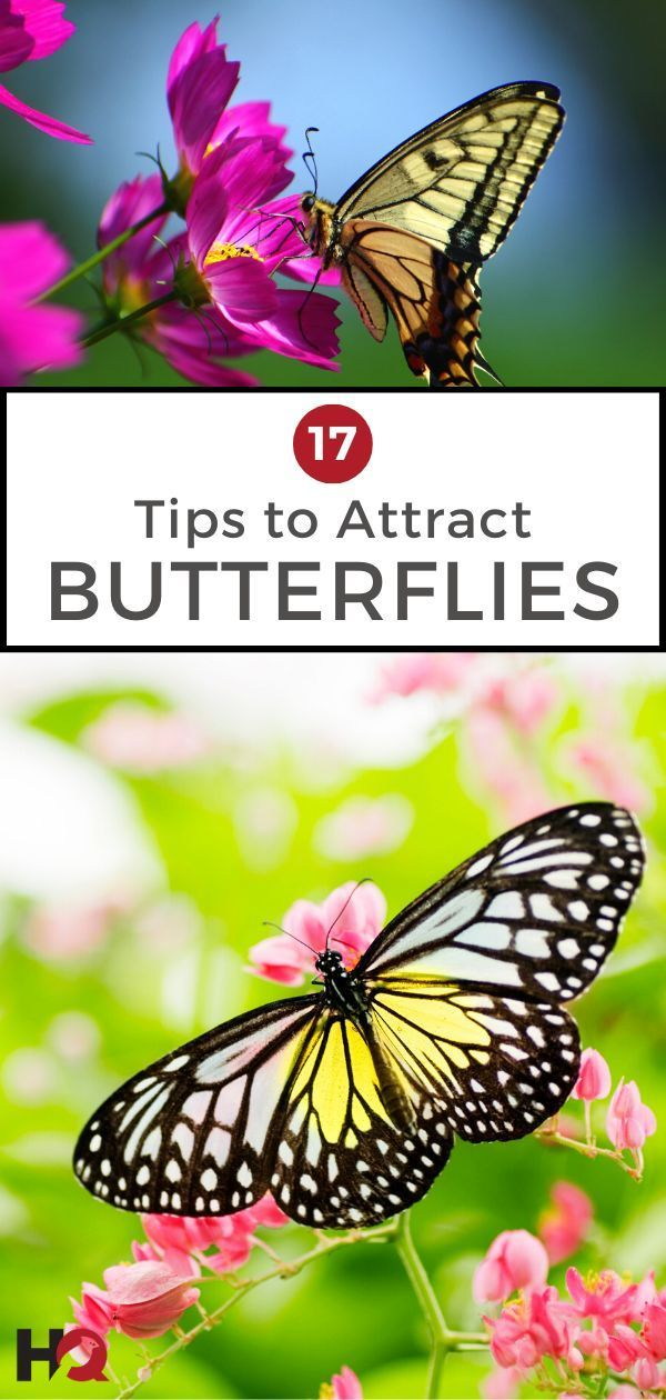 How to Attract Butterflies: 17 Tips (2020 Guide | Plants ...