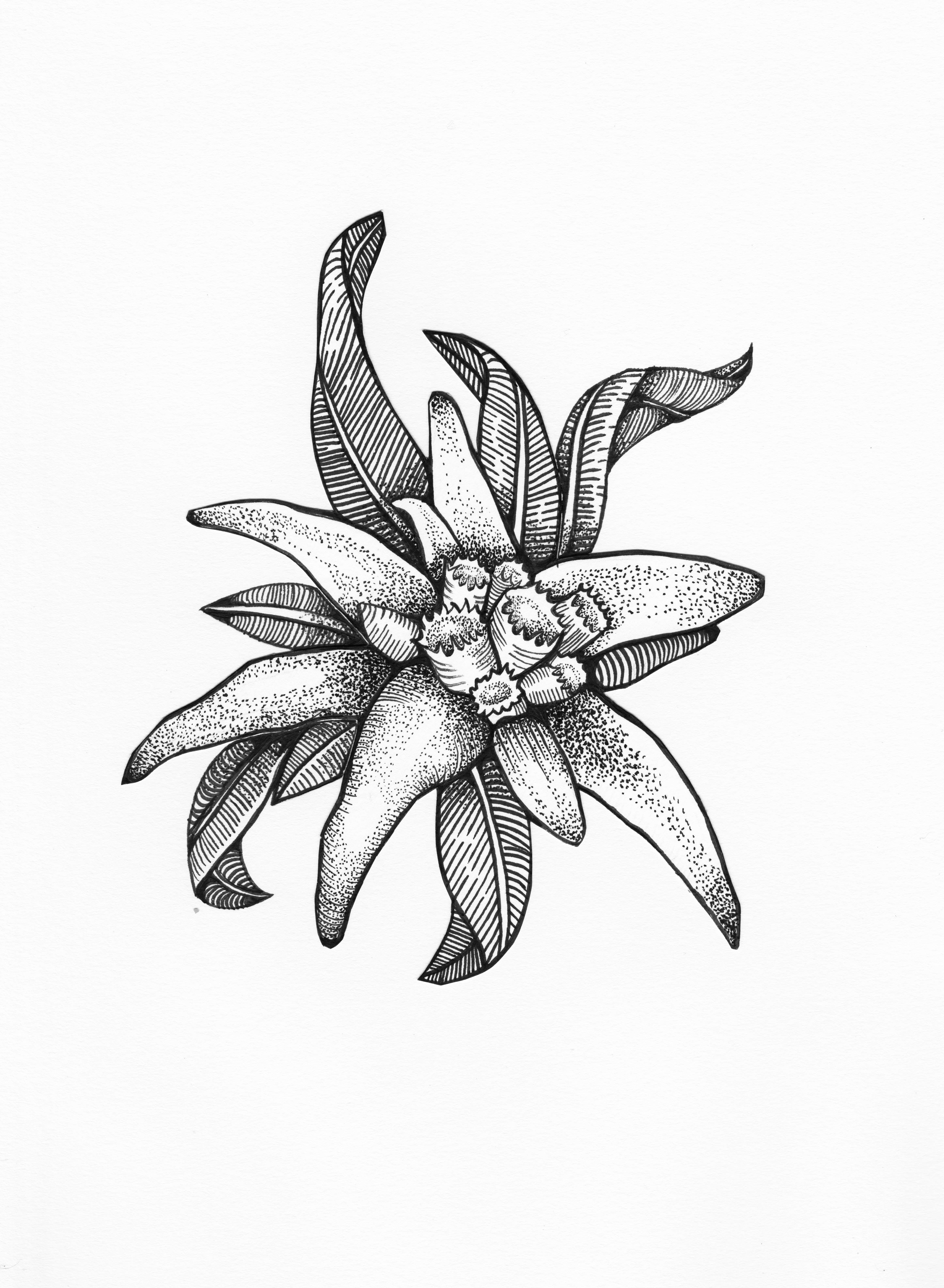 edelweiss flower symbolises courage tattoos pinterest tatouages tatouages v g taux et. Black Bedroom Furniture Sets. Home Design Ideas