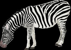 zebra2 decorative painting pinterest clip art and animal rh pinterest com zebra print numbers clipart zebra print clip art borders
