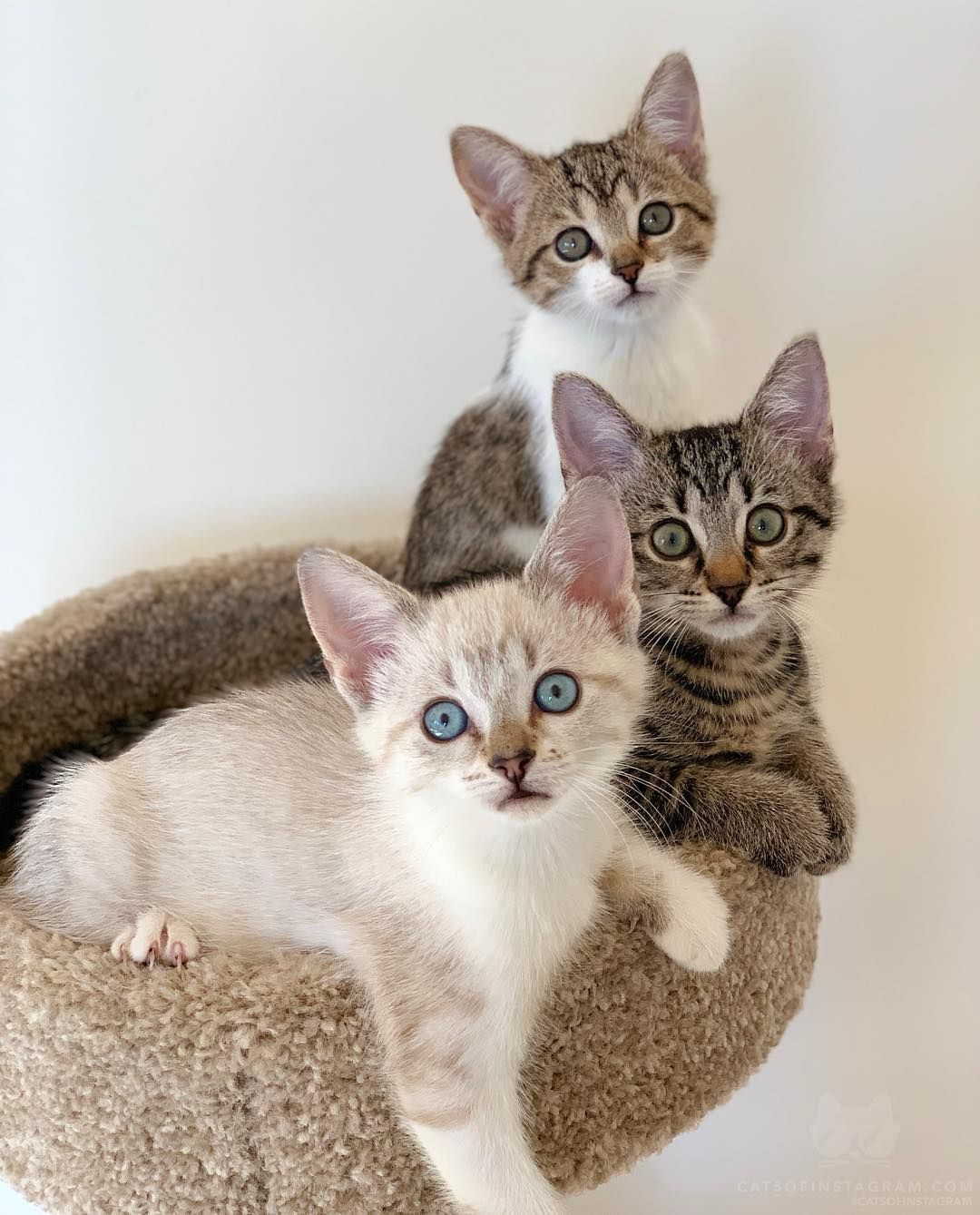 Twix Tootsie Roll And Twinkie One Of My Favorite Bunch That I Fostered From Music Indieartist Chicago Huisdieren Poesje Katten