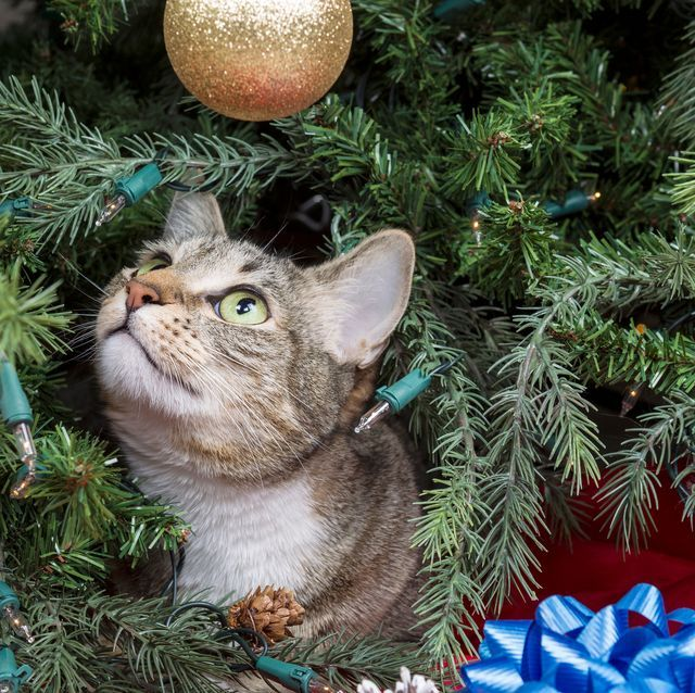 Keep Cat Away From Christmas Tree: 8 Santa-Approved Tricks For Keeping Your Cat Off Your