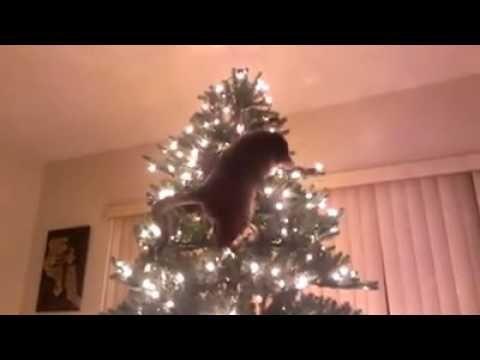 Cat Christmas Tree Disaster Http Youtu Be Izz16bbtgzq Cat Christmas Tree Disaster For More Funny Videos Sub Cat Christmas Tree Christmas Cats Christmas Tree