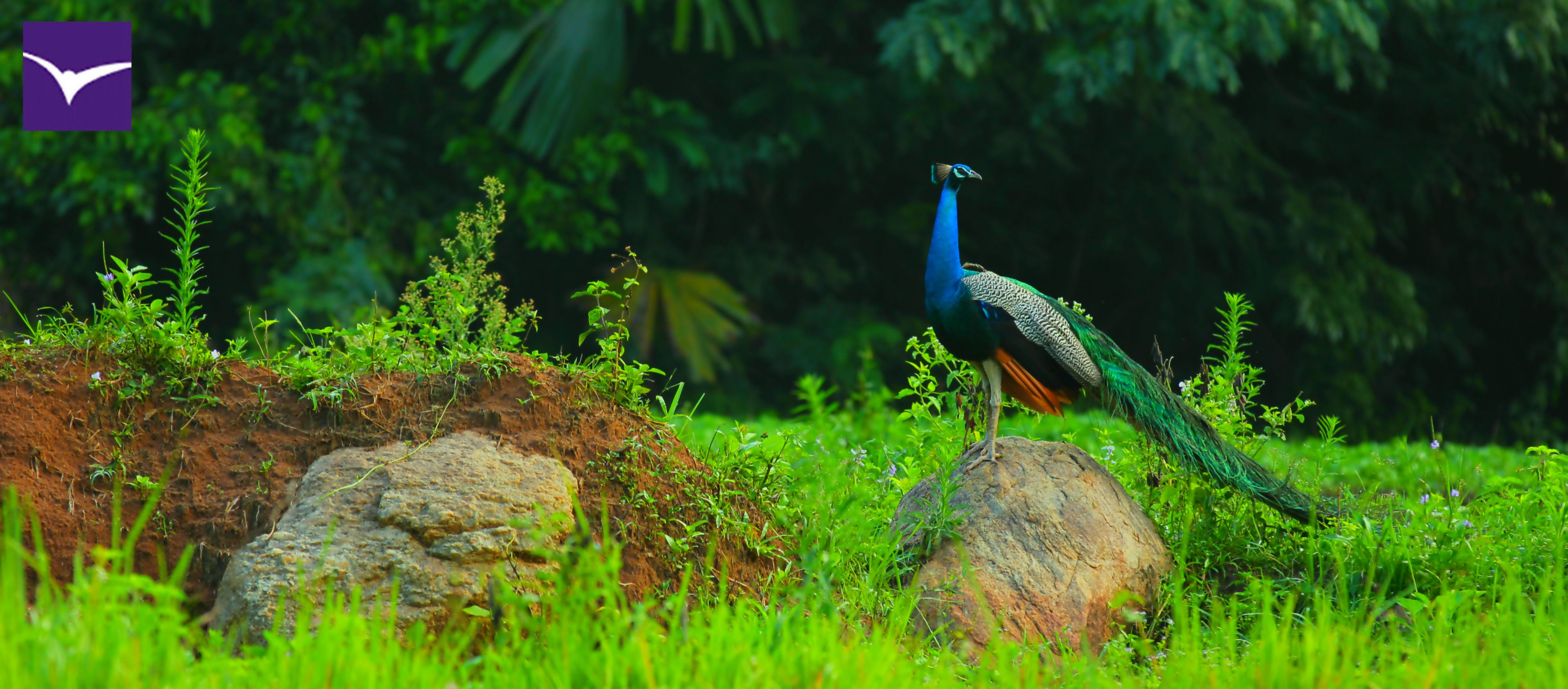 Bird Watching at Ella Jungle ! #ella #jungle #resort #tourism #srilanka #nature #eco #travel Like Us:https://www.facebook.com/ellajungleresort