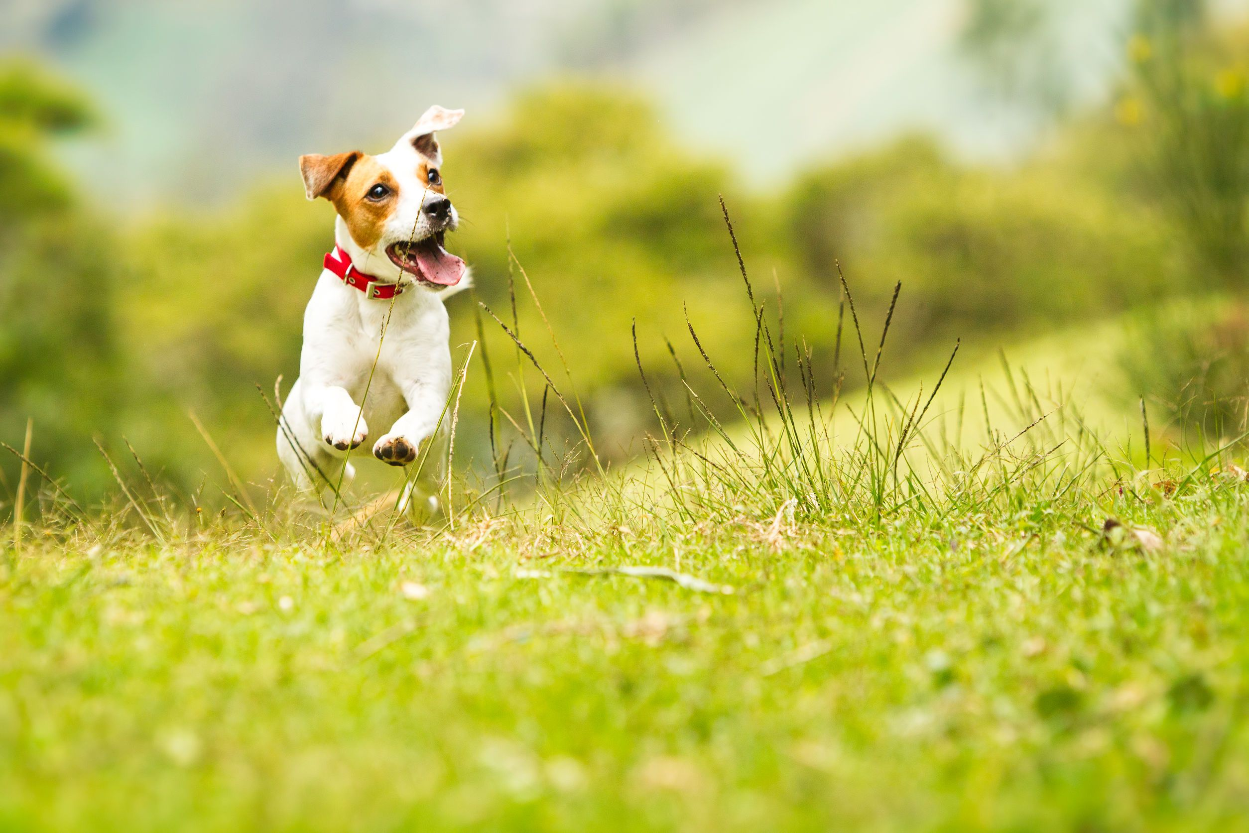 Your pet will feel like king or Queen of the hill