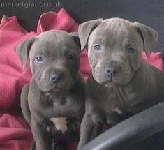 I Want Razas De Perros Perros Animales