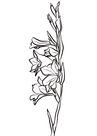 Click To See Printable Version Of Gladiolus Coloring Page Gladiolus Gladiolus Flower Tattoos Gladiolus Tattoo