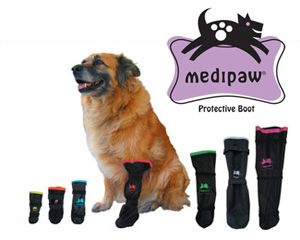Pin On Cool Pet Products