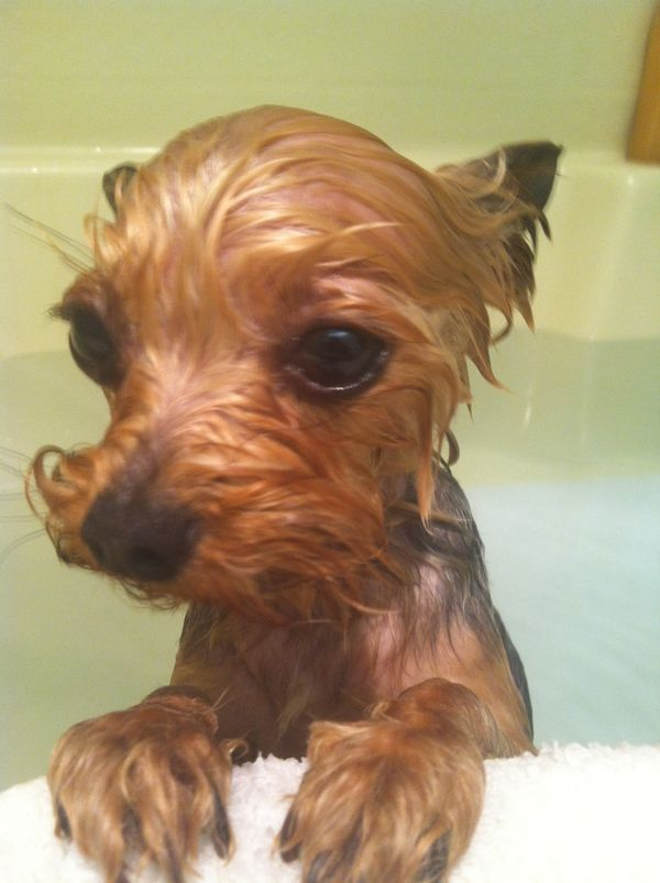 Bath time...This is exactly what Zeus looks like!