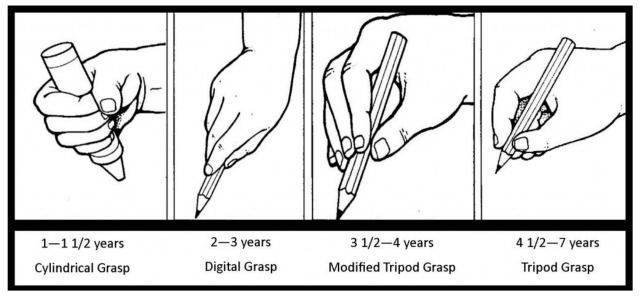 Image result for pencil grip development