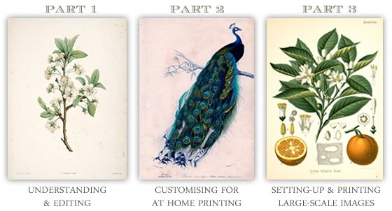 Free Art Printables Series - the painted hive - she has several ...