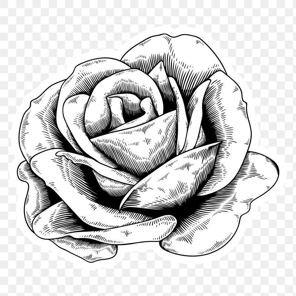 Black And White Rose Sticker With A White Border Design Element Premium Image By Rawpixel Com Tvz Black And White Roses Ink Pen Art Black And White Drawing