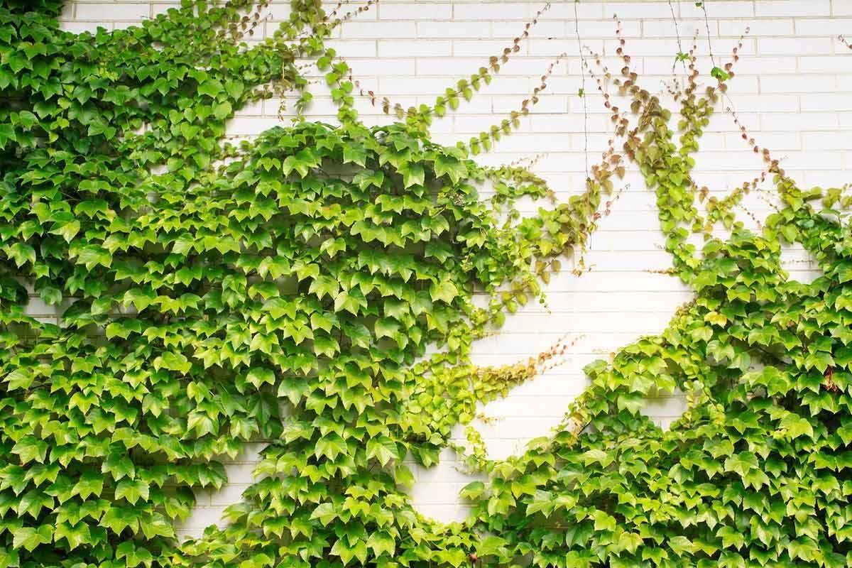 Bi Quyết Chăm Soc Tiểu Cảnh San Vườn Sau Khi Thiết Kế Bi Cảnh Chăm Kế Khi Quyết San Sau Soc T In 2020 Wall Climbing Plants Climbing Plants Rock Wall Gardens