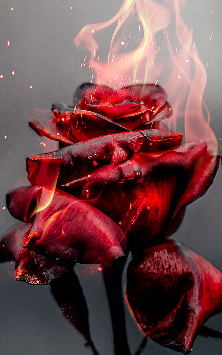 1080x1920 Burning Rose Fire Red Flower Wallpaper In 2020 Red Roses Wallpaper Red Flower Wallpaper Burning Rose