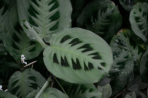 Plant Leaves, Green Life, Leaves