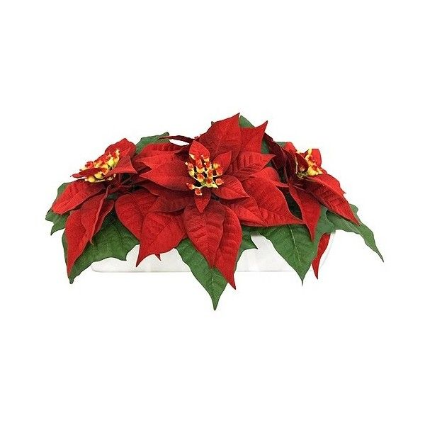 Poinsettia in Rectangular Pot (€17) ❤ liked on Polyvore featuring home, home decor, holiday decorations, christmas, red, rock pot, target home decor, poinsettia pot, red centerpieces and red pot