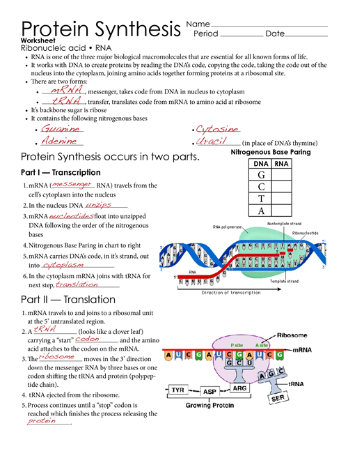 Protein Synthesis Worksheet Page 1   Biology lessons ...