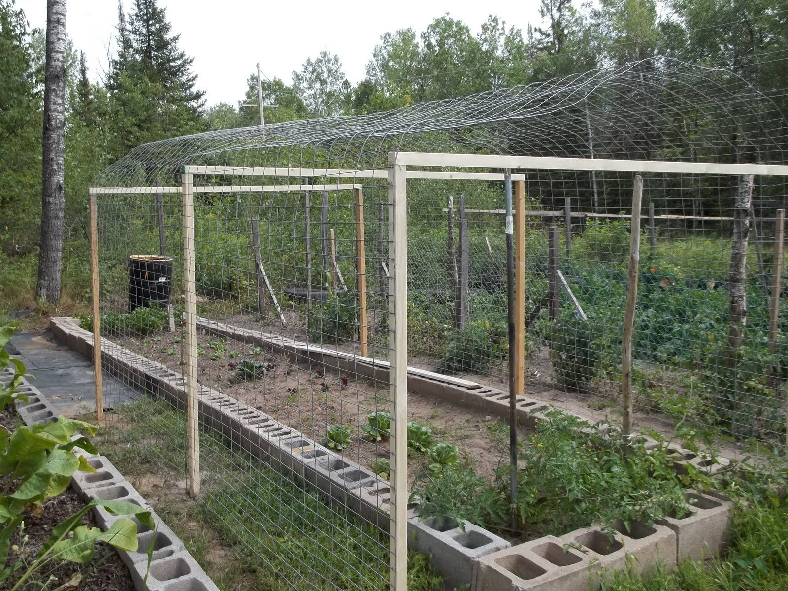 chicken wire garden fence. Chicken Wire Fence Ideas | Fencing Over The Frame And Used Staples To Garden E