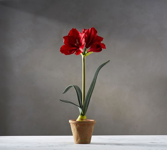 Faux Potted Amaryllis | Pottery Barn