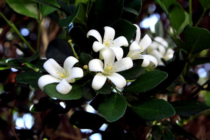 ▷ 1001 Blumenarten + Bilder und interessante Fakten | Blumen ...