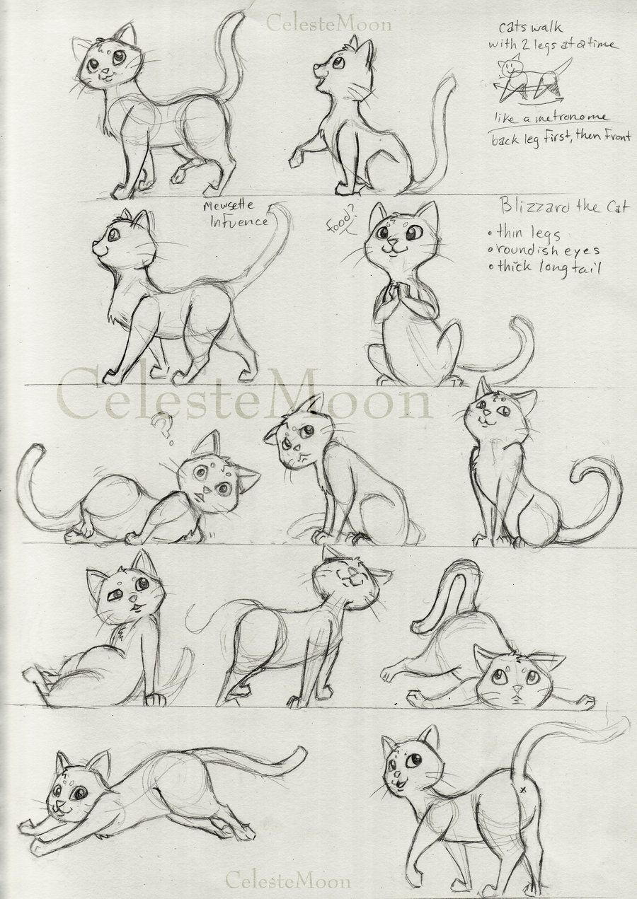 Blizzard The Cat Concept Poses By Celestemoon On Deviantart Cartoon Cat Drawing Cat Drawing Tutorial Cartoon Drawings