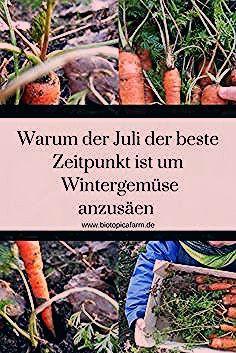 Photo of Selbstversorgung rund ums Jahr- Frisches Gemüse auch im Winter