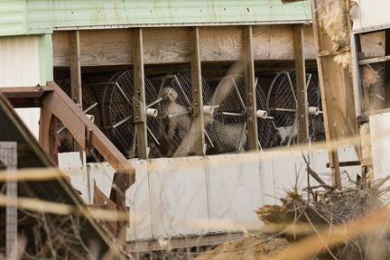 Lancaster County PA amish mill example  | Amish puppy mills