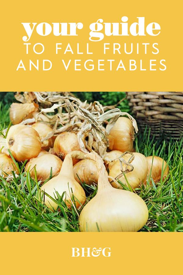 In late summer and early fall, onion foliage begins to dry up and fall over. This means your onions are ready for harvest. Get more tips for fall vegetables here. #fallvegetables #growingfallvegetables #guidetofallvegetables #fallvegetablegarden #bhg