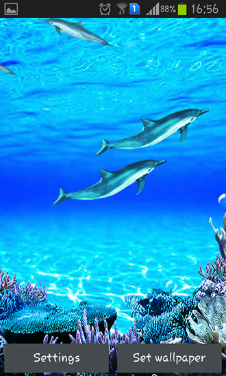 Dolphins Sounds Live Wallpaper For Android Free
