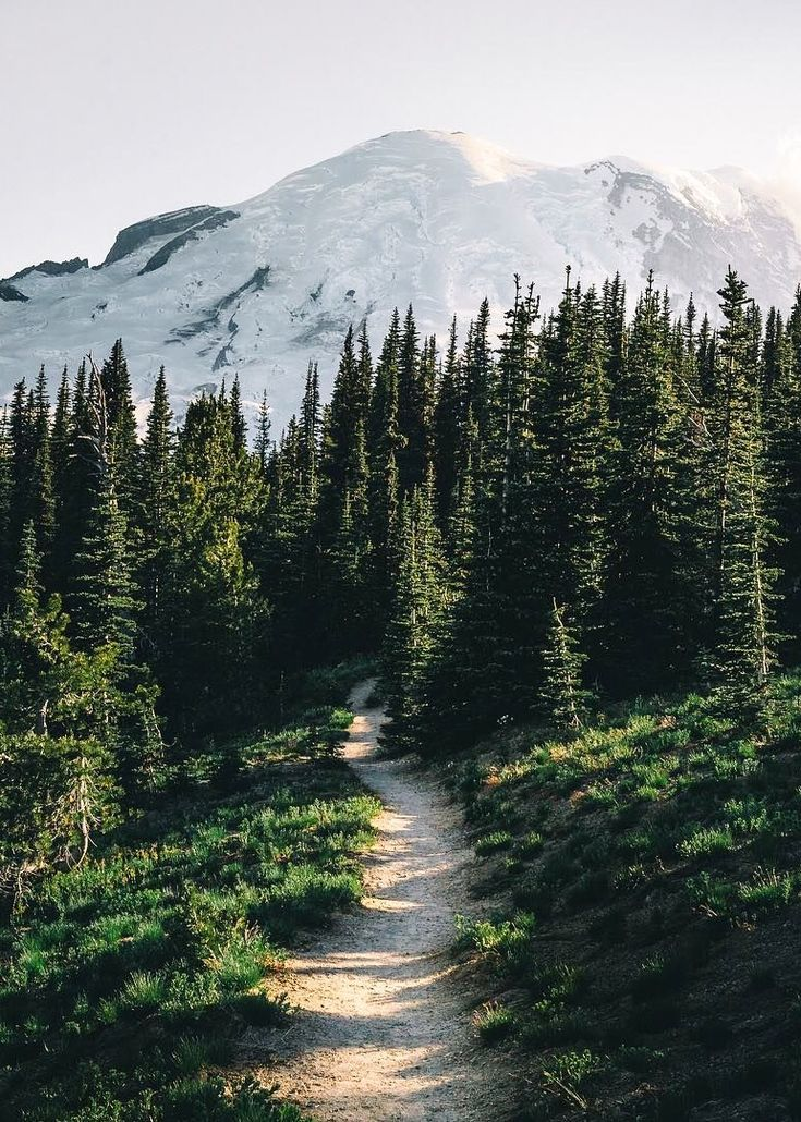🇺🇸 Trail (Mount Rainier National Park) by Elliot Hawkey (@elliothawkey) on Instagram cr.
