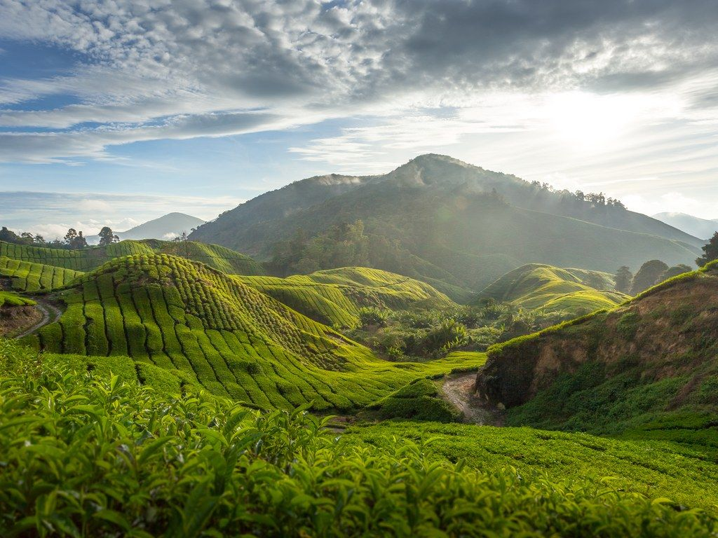 10 Places Where The U S Dollar Is Really Strong Right Now Cameron Highlands Trip Malaysia Travel