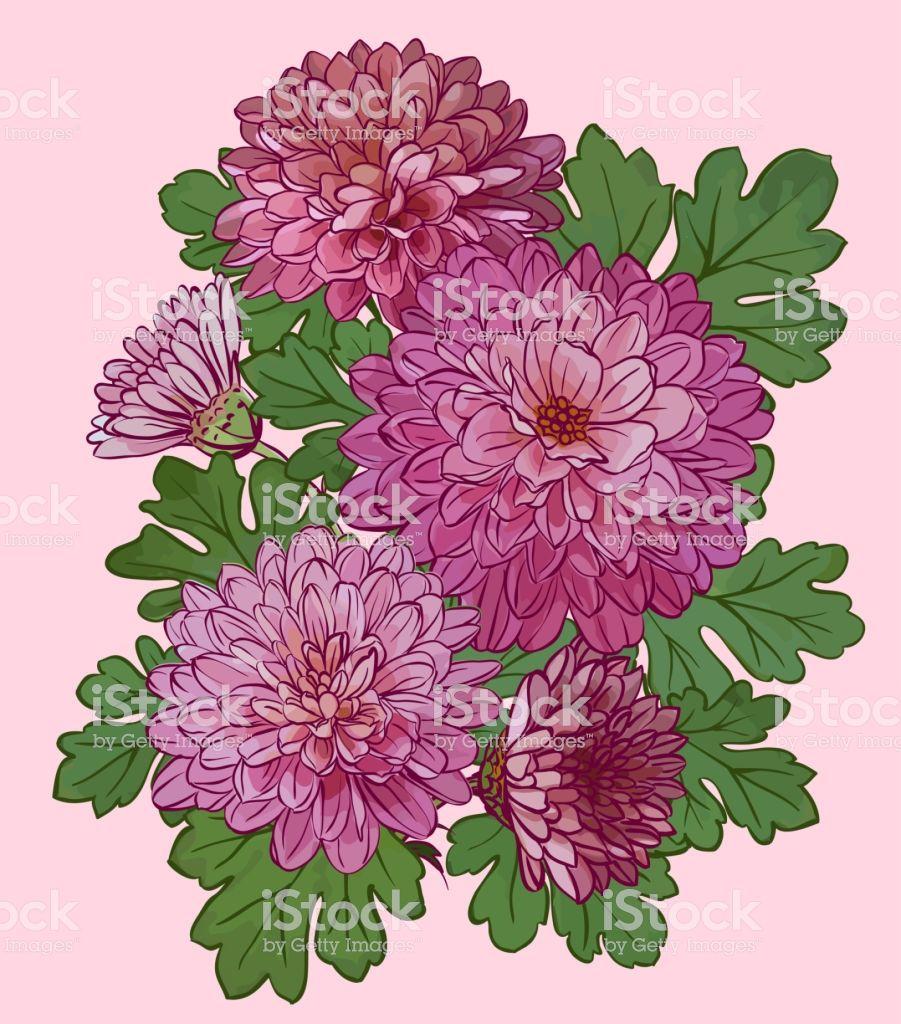 Beautiful Chrysanthemum Flowers Isolated On Pink Background Chrysanthemum Flower Free Vector Art Art Logo
