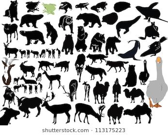 collection animals isolated on white background