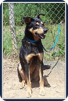 Act quickly to adopt JEREMY. Pets at this shelter may be held for only a short time.
